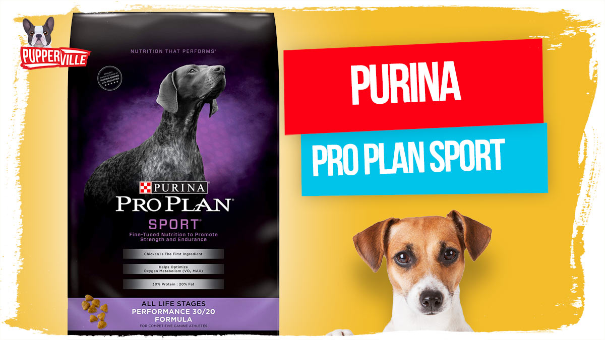 _Purina-Pro-Plan-Sport,-Energy-&-Vitality-Support,-High-Protein-Dry-Dog-Food