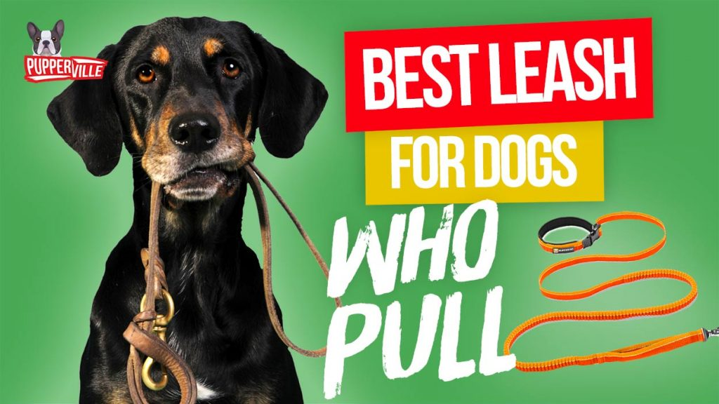 best-leash-for-dogs-who-pull