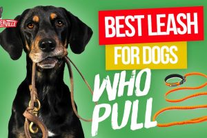 Whats the Best Leash for Dogs Who Pull? (UPDATED)