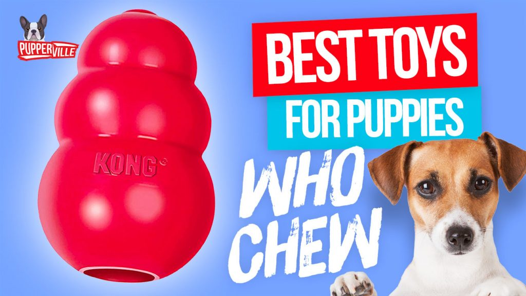 Top 10 Best Toys for Puppies Who Chew (UPDATED)
