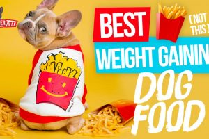 The Top 5 Best Weight Gaining Dog Food for your Doggo! (UPDATED)