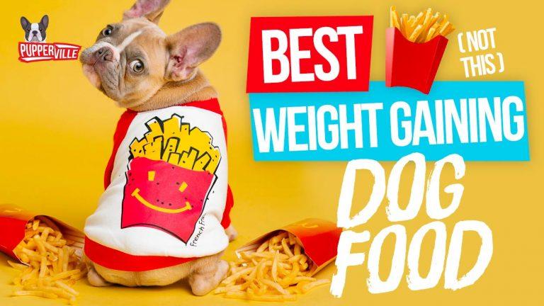 best-weight-gaining-dog-food