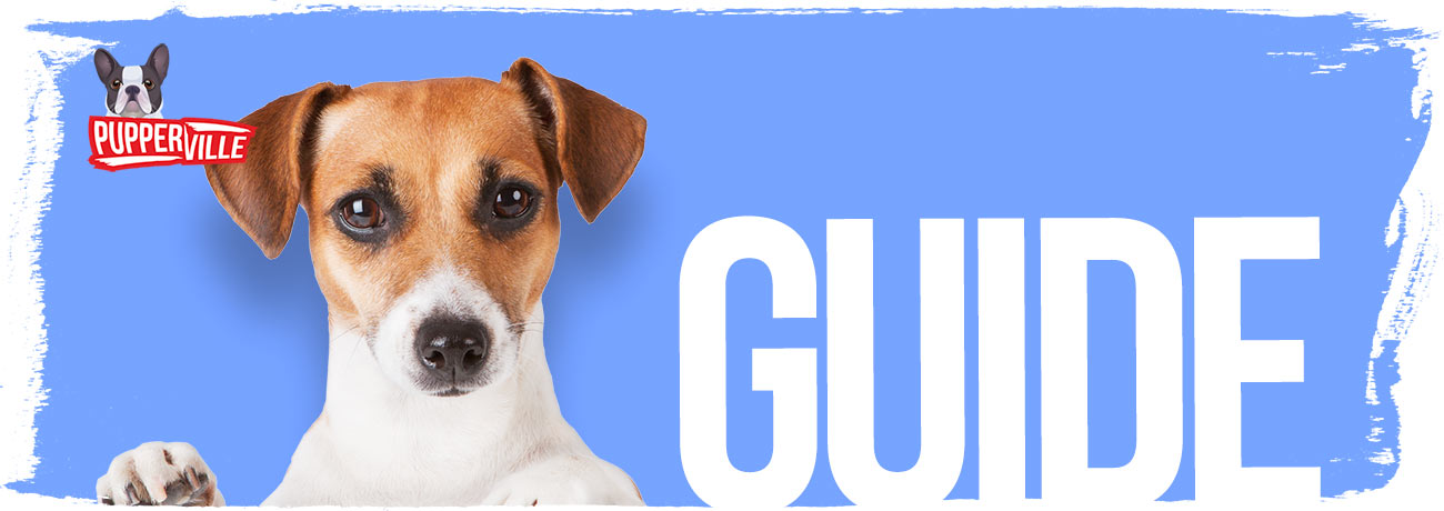 dog-chew-toys-buyers-guide