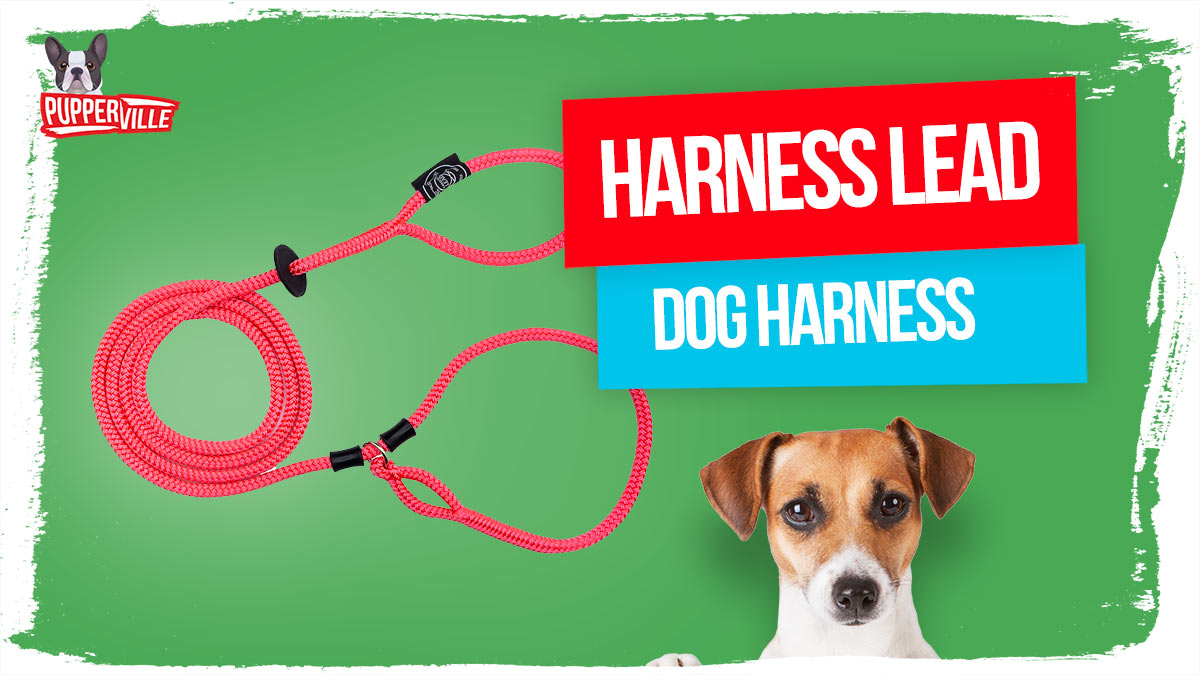 harness-lead-dog-harness