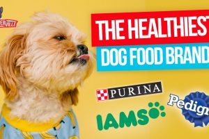 What is The Healthiest Dog Food Brand? (UPDATED)