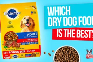 Which Dry Dog Food Is The Best? (UPDATED)